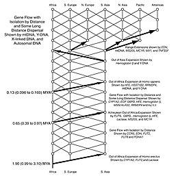 Human Evolution Wikipedia - Evolution visual effects last 130 years