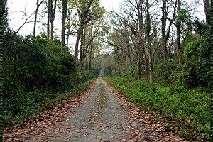Chalsa, India - Image: Jungle at Chalsa
