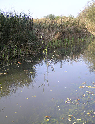Fowlmere RSPB reserve - Picture of Fowlmere from nature trail
