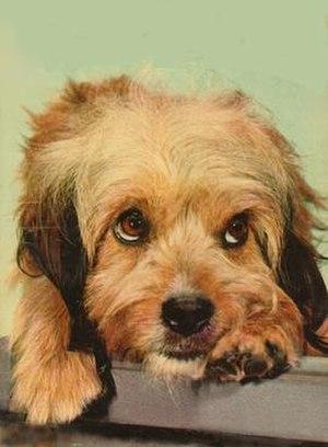 Higgins (dog) - Image: Higgins the Dog