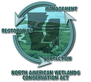 North American Wetlands Conservation Act - Management, Restoration, and Protection must work together in order for the wetlands to thrive