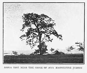 Ann Hasseltine Judson - Hopia tree near the grave of Ann Hasseltine Judson circa 1913