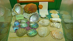 Lions Nature Education Centre - Image: Shell Collection 2
