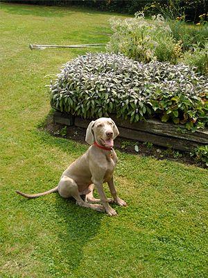 Balder, six months old, in the garden.