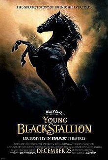 The Young Black Stallion.jpg