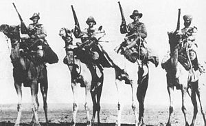 Imperial Camel Corps - A posed photograph of Australian, British, New Zealand and Indian Camel Corps troopers