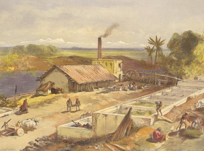 Indigo factory bengal2