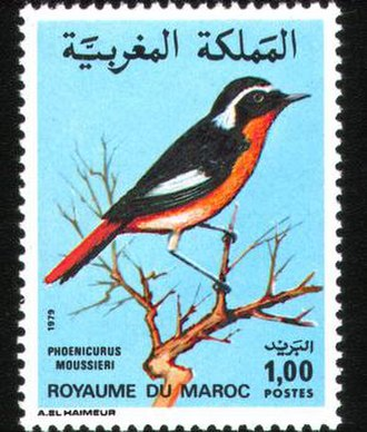 Postage stamps and postal history of Morocco - A 1979 stamp of Morocco.