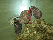 Hermit crabs in an aquarium.