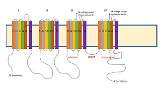 Ball and chain inactivation - Image: Sodium inactivation mechanims