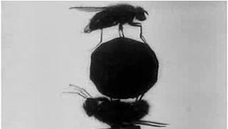 The Acrobatic Fly - Screenshot from the film