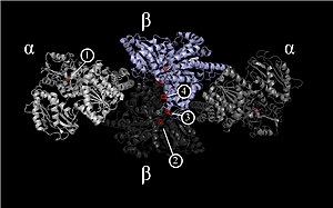 Carbon monoxide dehydrogenase - Image: CODH M.thermoacetica