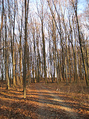 A temperate deciduous broadleaf forest, the Hasenholz, southeast of Kirchheim unter Teck, Swabia, Germany.