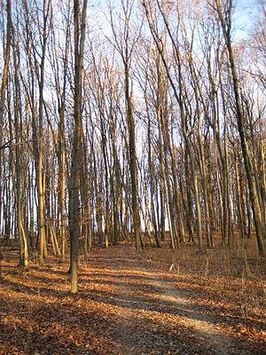 Kirchheim unter Teck - The Hasenholz woods southeast of Kirchheim.