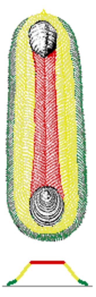 Halkieriid - Image: Halkieria scale zones color coded