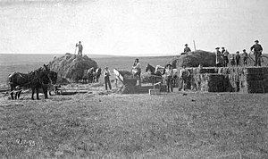 Nobles County, Minnesota - Haying operation in Nobles County 1895 Photo by E.F. Buchanan