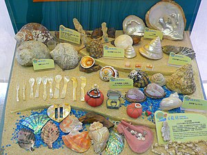 Lions Nature Education Centre - Image: Shell Collection 1