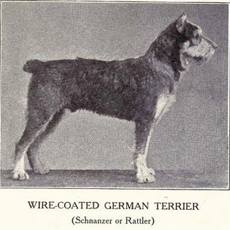Standard Schnauzer - Schnauzer of medium size, from W. E. Mason's work Dogs of All Nations (1915) prepared for the Panama–Pacific International Exposition.