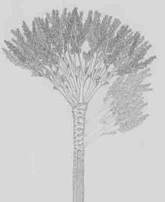 Gilboa Fossil Forest - Gilboa tree fossil