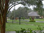 Tree blown down during Hurricane Lili