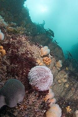 Scuba Diving Clubs Long Island