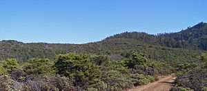 Mount Hood (California) - Pygmy forest on northwest slope of Mount Hood. Note darker vegetation in upper right is a mixed oak woodland, of canopy height about 120 feet (37 m).