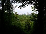 A view of Panama City from inside the Parque Natural Metropolitano.