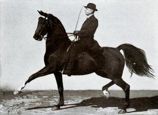 Tom Bass (horse trainer)