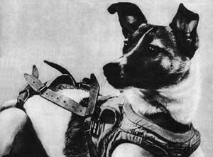 Laika - In 1957, Laika became the first animal launched into orbit, paving the way for human spaceflight. This photograph shows her in a flight harness.