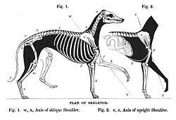 meaning of greyhound