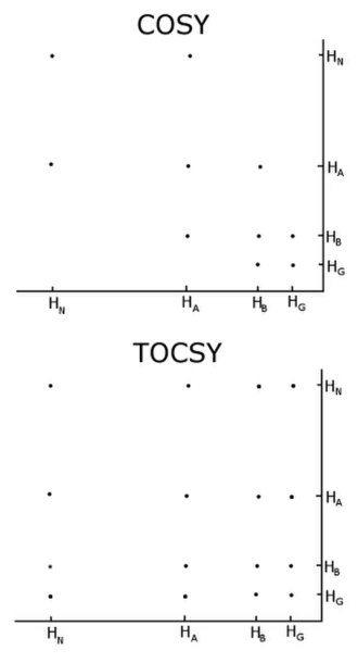 Nuclear magnetic resonance spectroscopy of proteins - Comparison of a COSY and TOCSY 2D spectra for an amino acid like glutamate or methionine. The TOCSY shows off diagonal crosspeaks between all protons in the spectrum, but the COSY only has crosspeaks between neighbours.