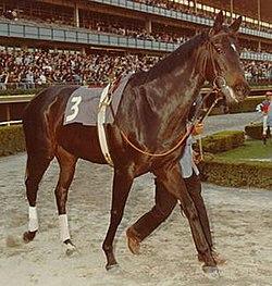 Ruffian Pferd