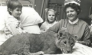June Jolly - June Jolly with patients and a lion cub at Brook General Hospital