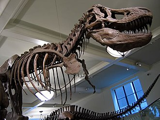 Education in New York City - A dinosaur replica at the American Museum of Natural History