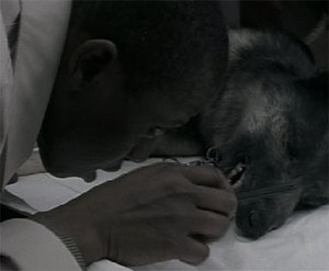 A Dog and Pony Show (Homicide: Life on the Street) - Image: A dog and pony show homicide life on the street