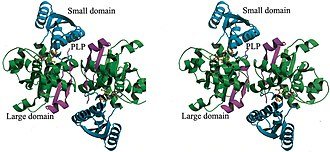 Serine dehydratase - Image: Largeand Small Domain SDH