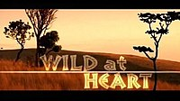 Picture of a TV show: Wild At Heart
