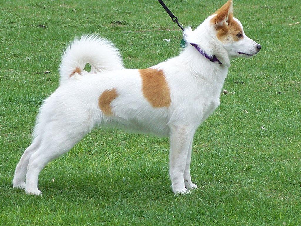 Dog Kennels West Kelowna