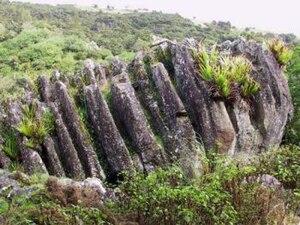 Horeke basalts - Wairere boulders lapiez