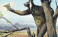 A large, hairy creature stands upright in a tree, holding the trunk for support while grabbing food with its right hand. It has big ears, long snout, and a human-like appearance.