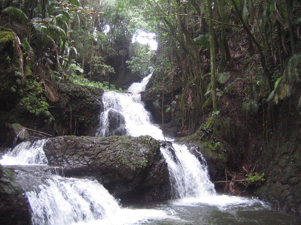 File Hawaii Big Island Hawaii Tropical Botanical Garden 140 Onomea Falls Jpg Wikipedia