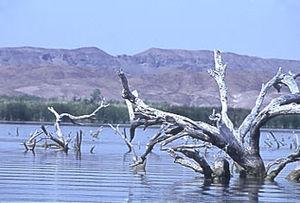 Topock, Arizona - Topock Marsh