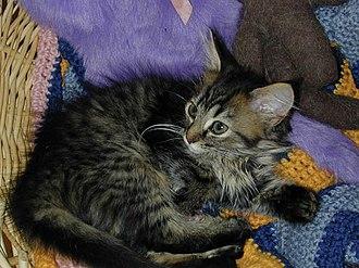 International Animal Rescue - Kitten at Catastrophes Cat Rescue.