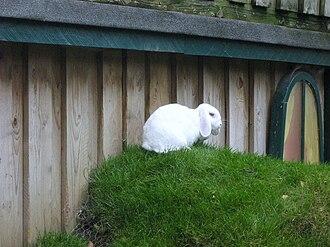Longleat Safari Park - Animal Adventure rabbit