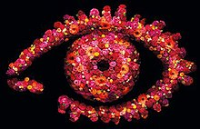 BB11-eye-possible-620x465.jpg