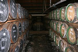 Glenmorangie distillery - Casks maturing at The Glenmorangie Distillery