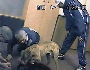 Gang members dog fighting in a vacant office b...
