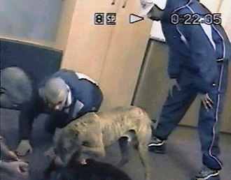 Dog fighting - Gang members dog fighting in a vacant office building