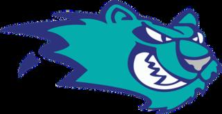 Worcester IceCats ice hockey team