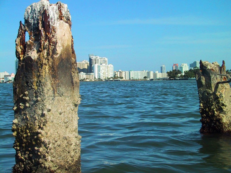 1927 sea wall pilings from the failed Isola di Lolando construction project in Miami Beach, Florida